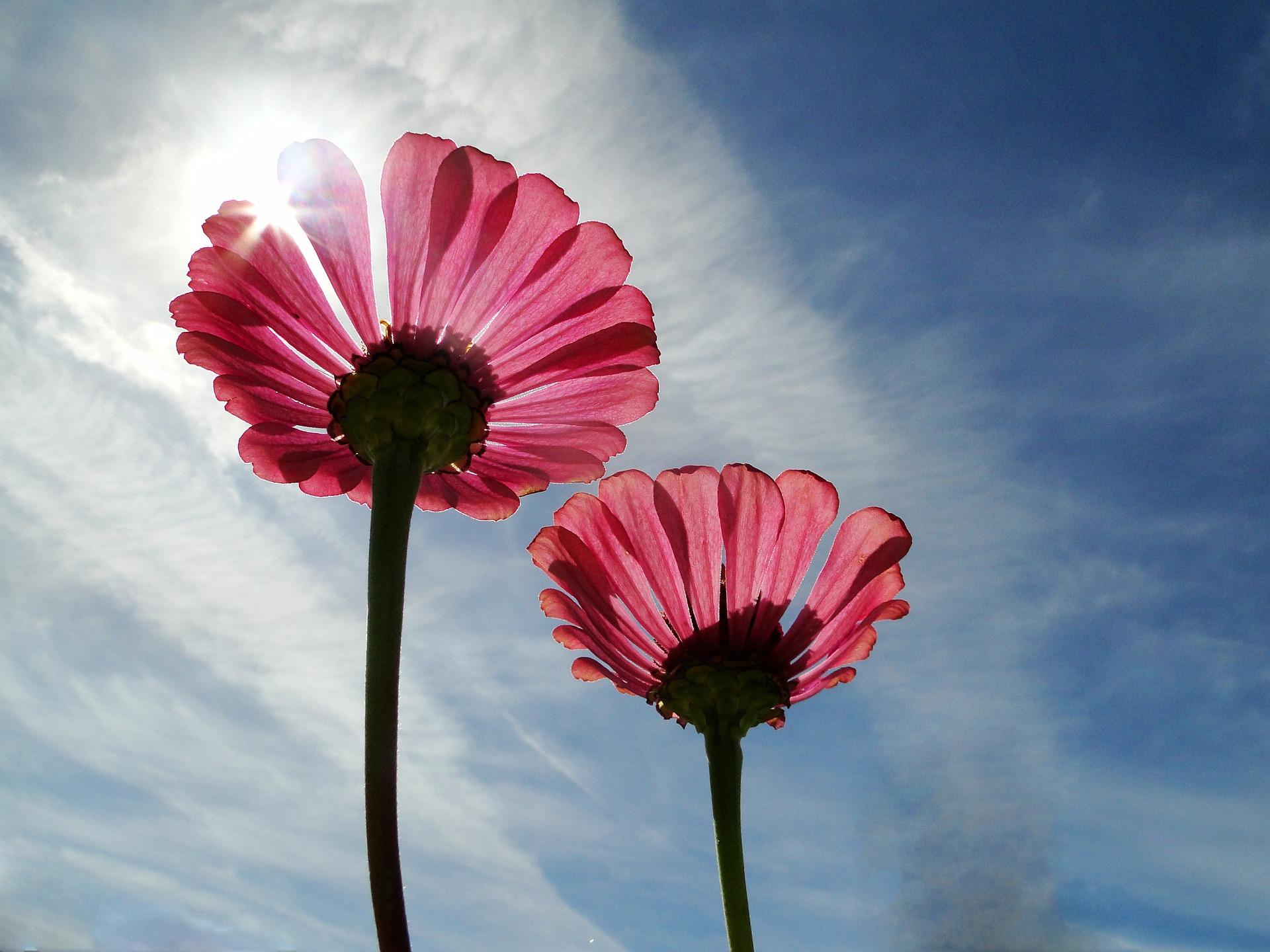 Zwei Blumen als Symbolbild für Solo-Mutterschaft